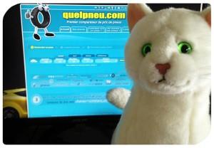 Ramsès chat Feu Vert Quelpneu.com