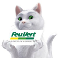 feu-vert-chat-blanc